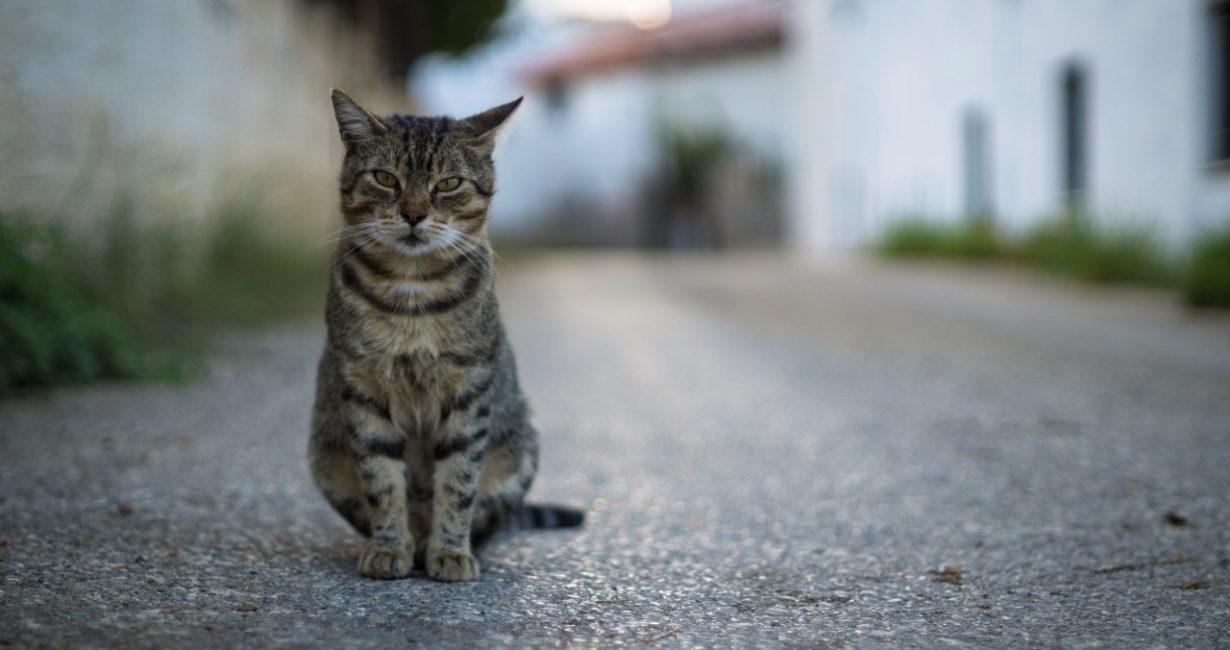 Συγκινεί ο ιερέας που φροντίζει τις γάτες στην Άνω Μερά